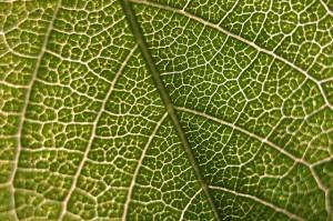 leaf-690947_640